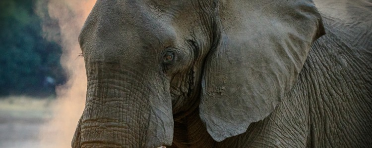 28-elefante