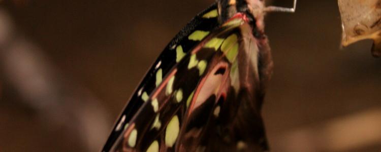 hotblack_20070916_butterflies-28